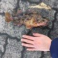 きむさんの福井県での釣果写真