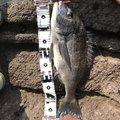 波平さんの静岡県熱海市での釣果写真
