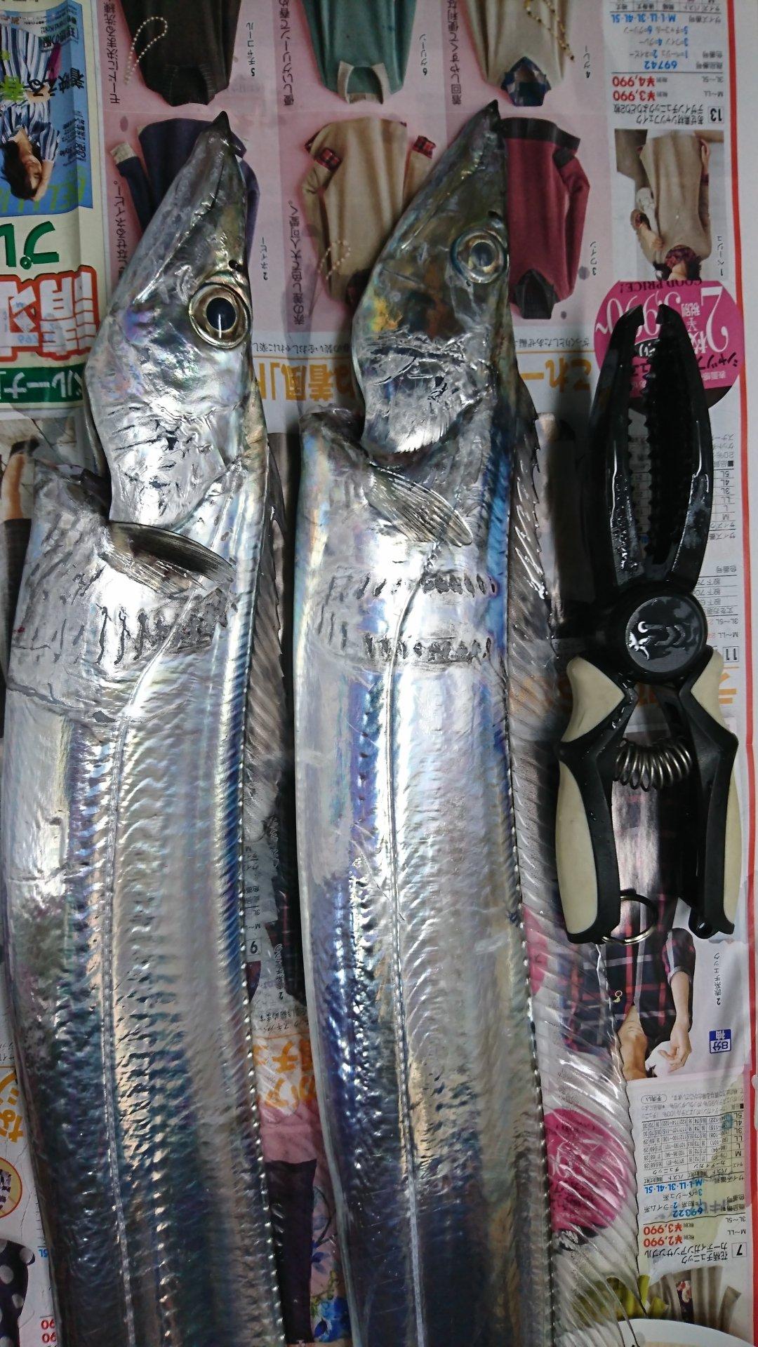 サトシさんの投稿画像,写っている魚はタチウオ