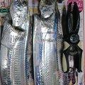 サトシさんの千葉県南房総市での釣果写真