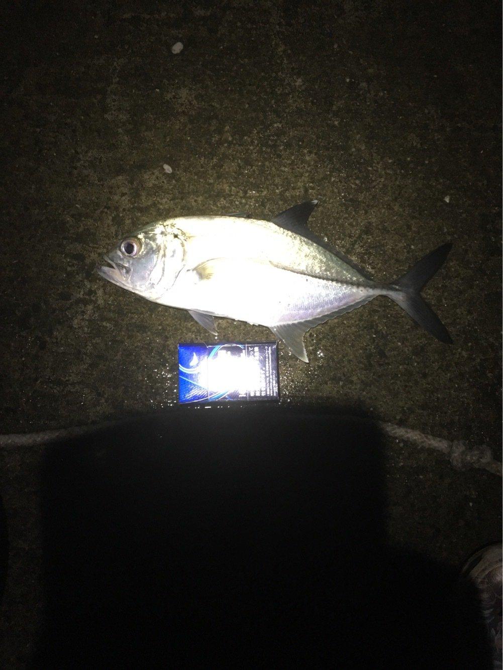 竜也さんの投稿画像,写っている魚はギンガメアジ