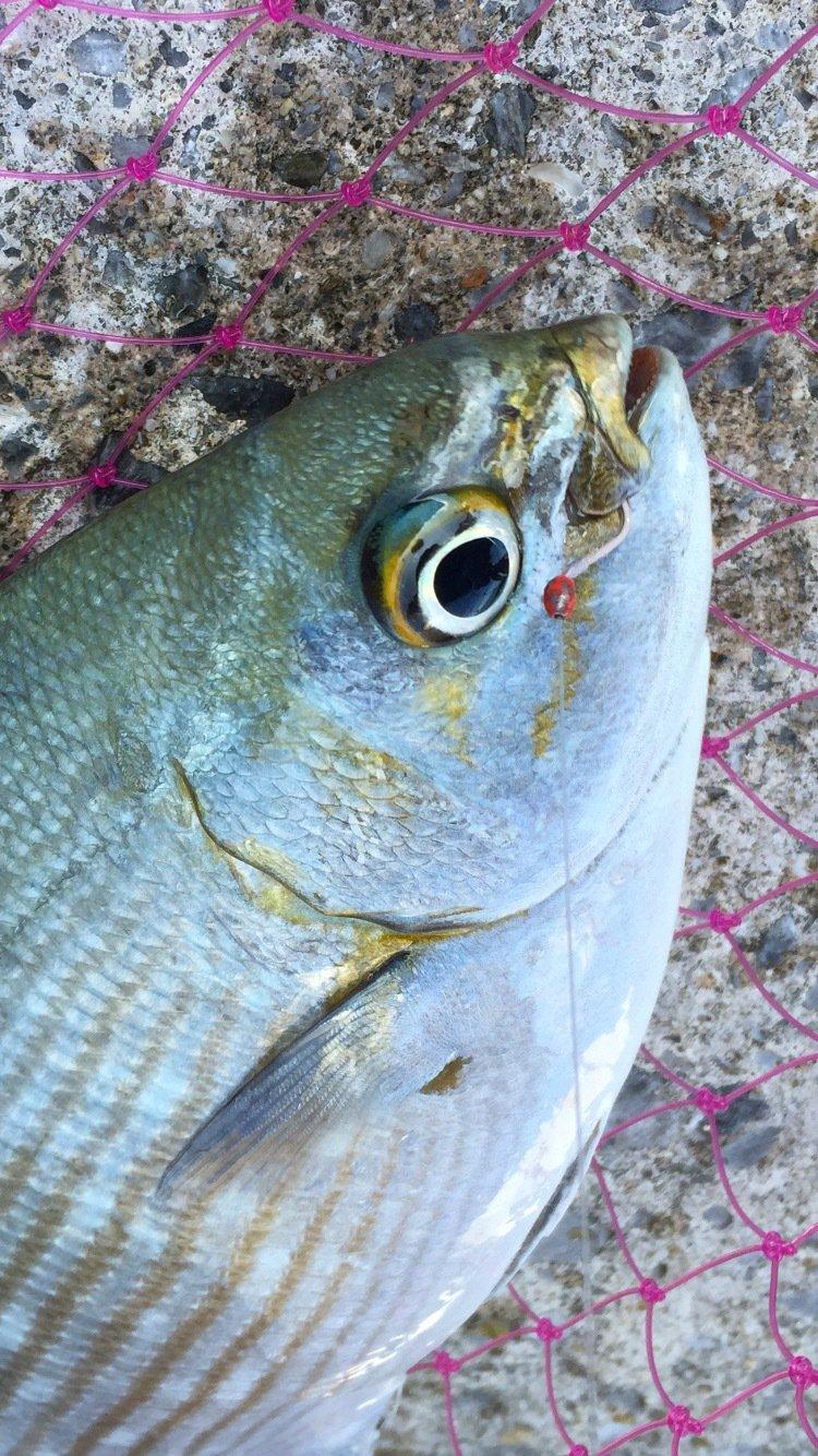 ハジメさんの投稿画像,写っている魚は