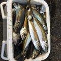 northさんの山口県大島郡での釣果写真