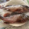 波止場修理さんの広島県呉市での釣果写真