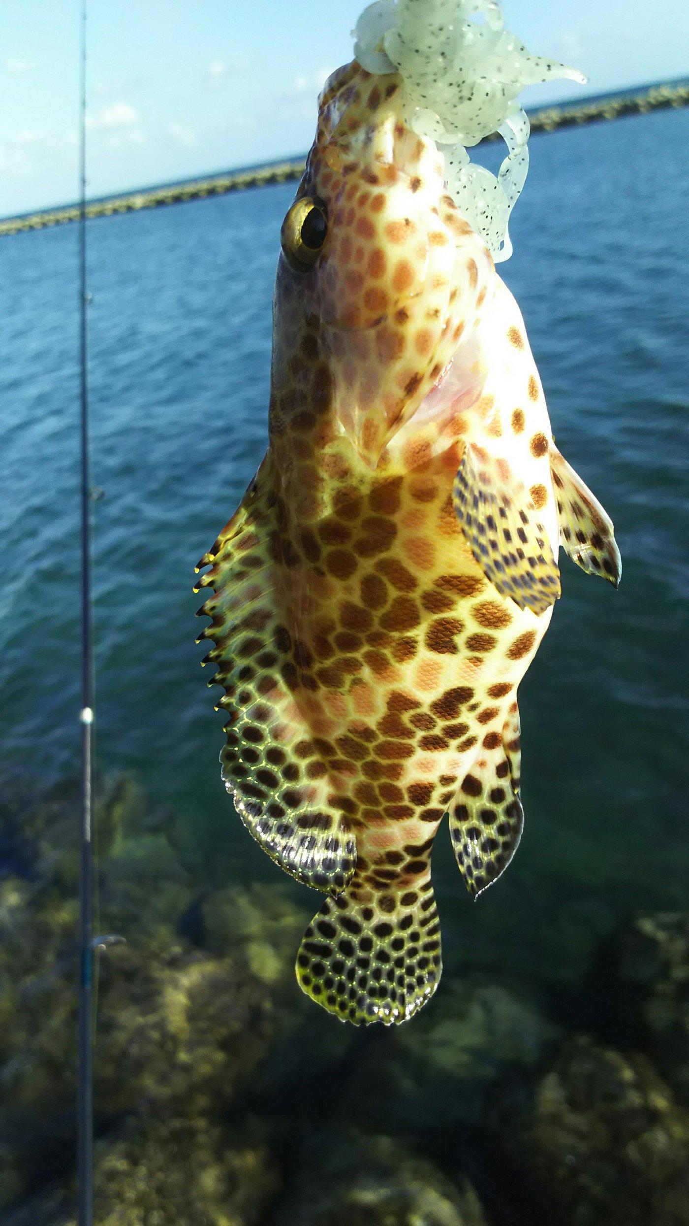 リュウマさんの投稿画像,写っている魚はカサゴ