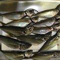 ごまさんさんの新潟県北蒲原郡での釣果写真