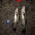 ぎんいちさんの大阪府泉北郡での釣果写真