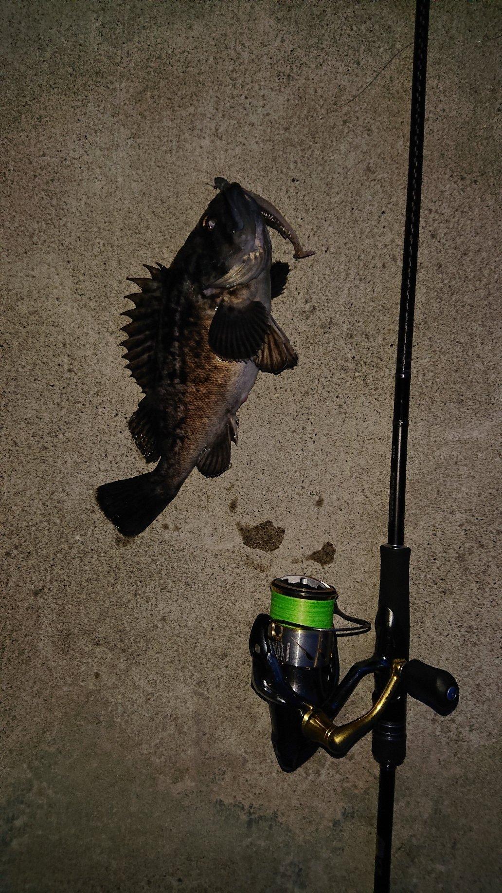 つっかさんの投稿画像,写っている魚はクロソイ