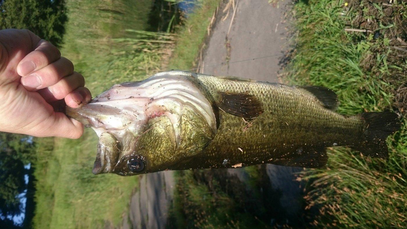 石ころさんの投稿画像,写っている魚はブラックバス