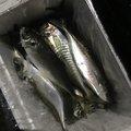 ムラテツさんの宮崎県延岡市での釣果写真