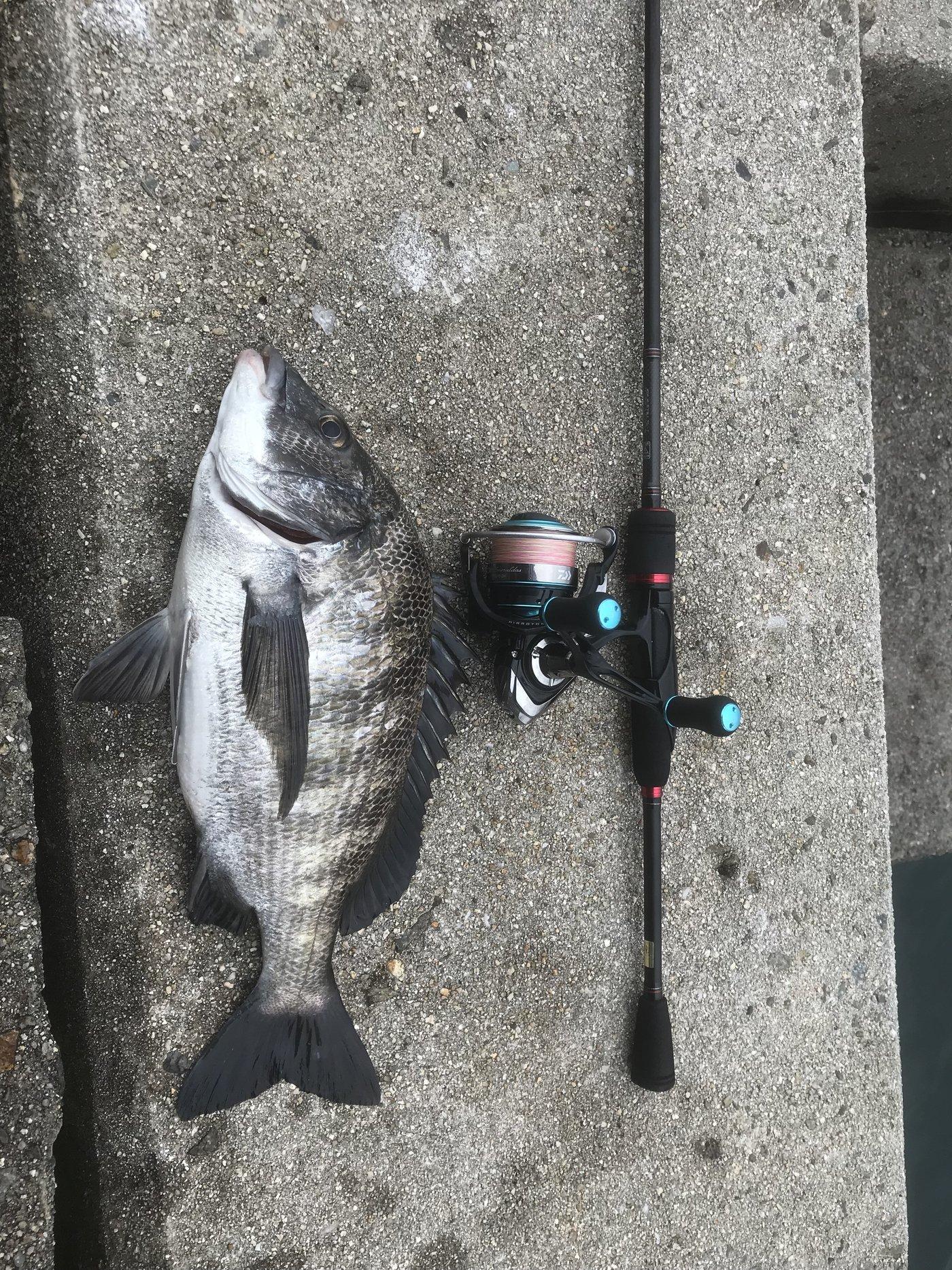 オカラバー12さんの投稿画像,写っている魚はクロダイ,