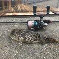 オカラバー12さんの広島県三原市での釣果写真
