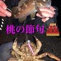 砂肝さんの青森県上北郡での釣果写真