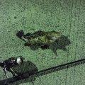 dollyvardenさんの山口県玖珂郡での釣果写真