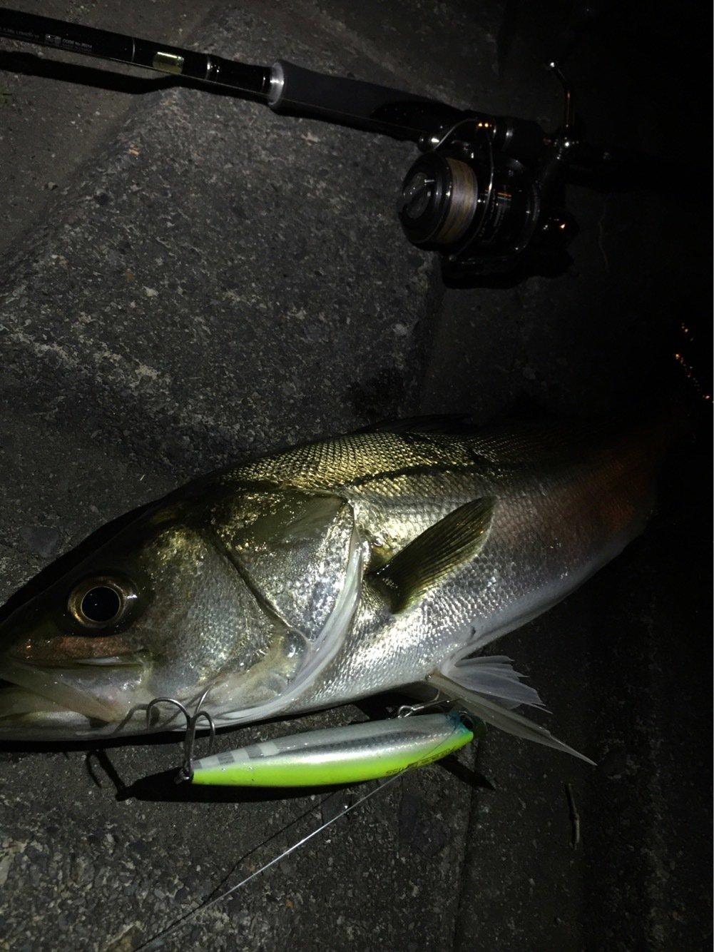 ひろひさんの投稿画像,写っている魚はスズキ