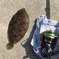 ノロリさんの和歌山県海南市での釣果写真