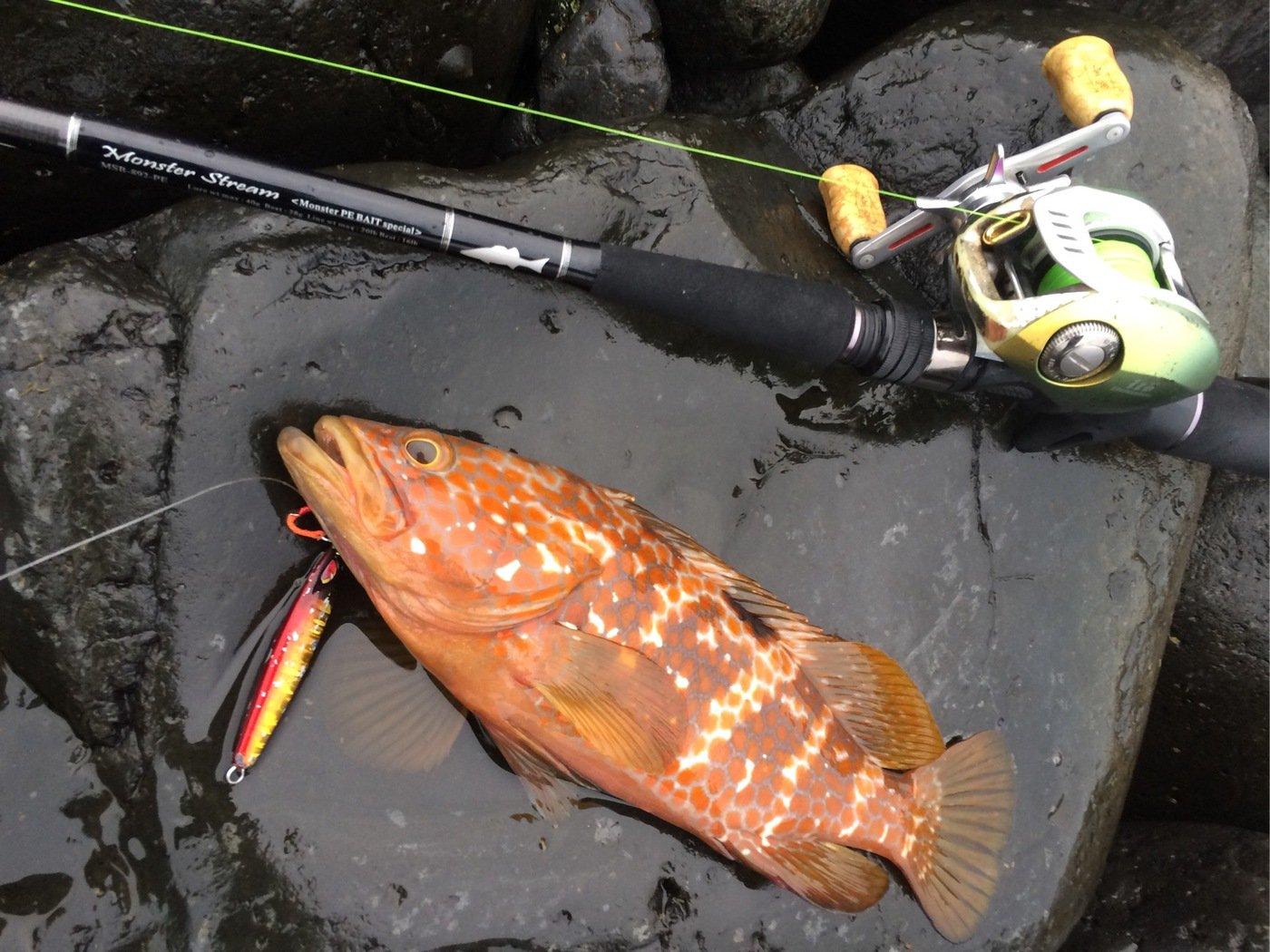 エンドウさんの投稿画像,写っている魚はキジハタ