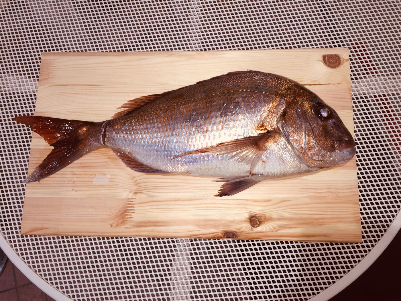 波那の慶治さんの投稿画像,写っている魚はマダイ,アジ