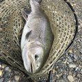 akakage さんの岐阜県瑞浪市での釣果写真