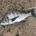 Tamotsu.Nakanoさんの島根県での釣果写真