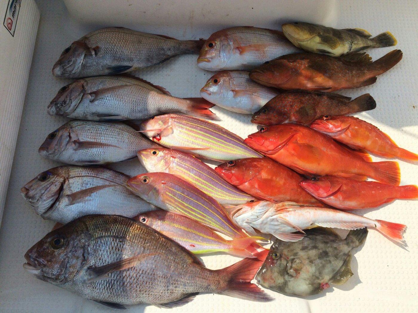 ひろさんの投稿画像,写っている魚はアカハタ