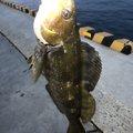 けんやさんの宮城県気仙沼市での釣果写真