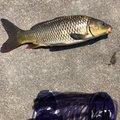 shiroさんの和歌山県紀の川市での釣果写真
