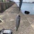 Okai Taxiさんの三重県四日市市での釣果写真
