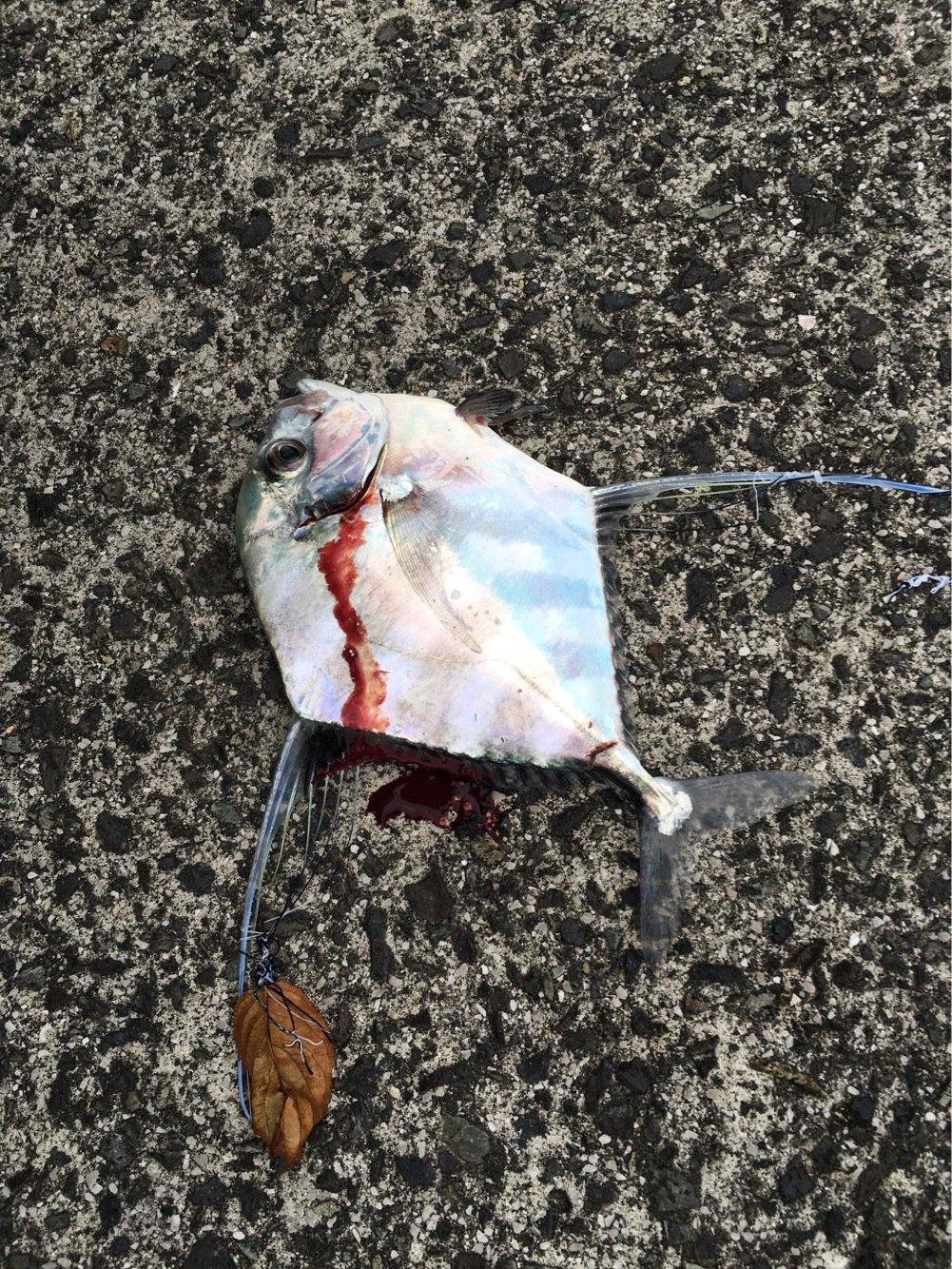 長飛丸さんの投稿画像,写っている魚はイトヒキアジ