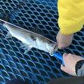 でぐぞうさんの千葉県市原市での釣果写真