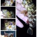 KRO さんのアカササノハベラの釣果写真