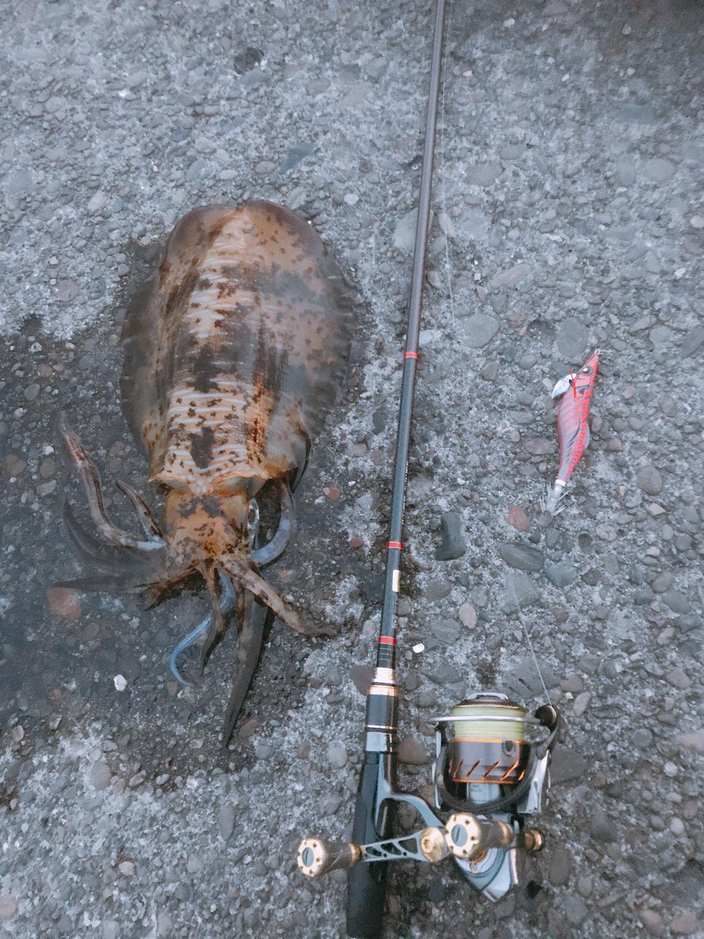 Takuya さんの投稿画像,写っている魚は,