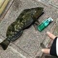 あんくさんの宮城県石巻市での釣果写真