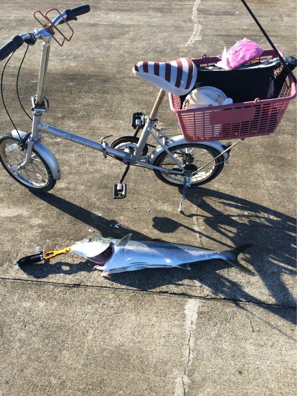 クロさんの投稿画像,写っている魚はブリ