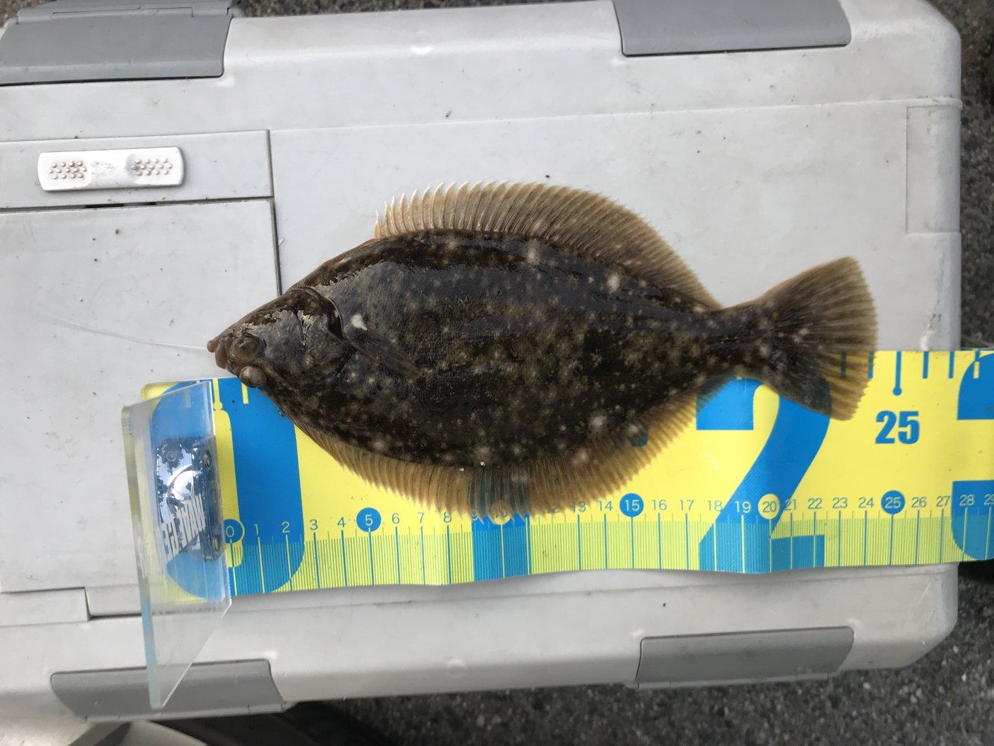西岡春雄さんの投稿画像,写っている魚はカレイ