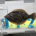 西岡春雄さんの広島県江田島市での釣果写真