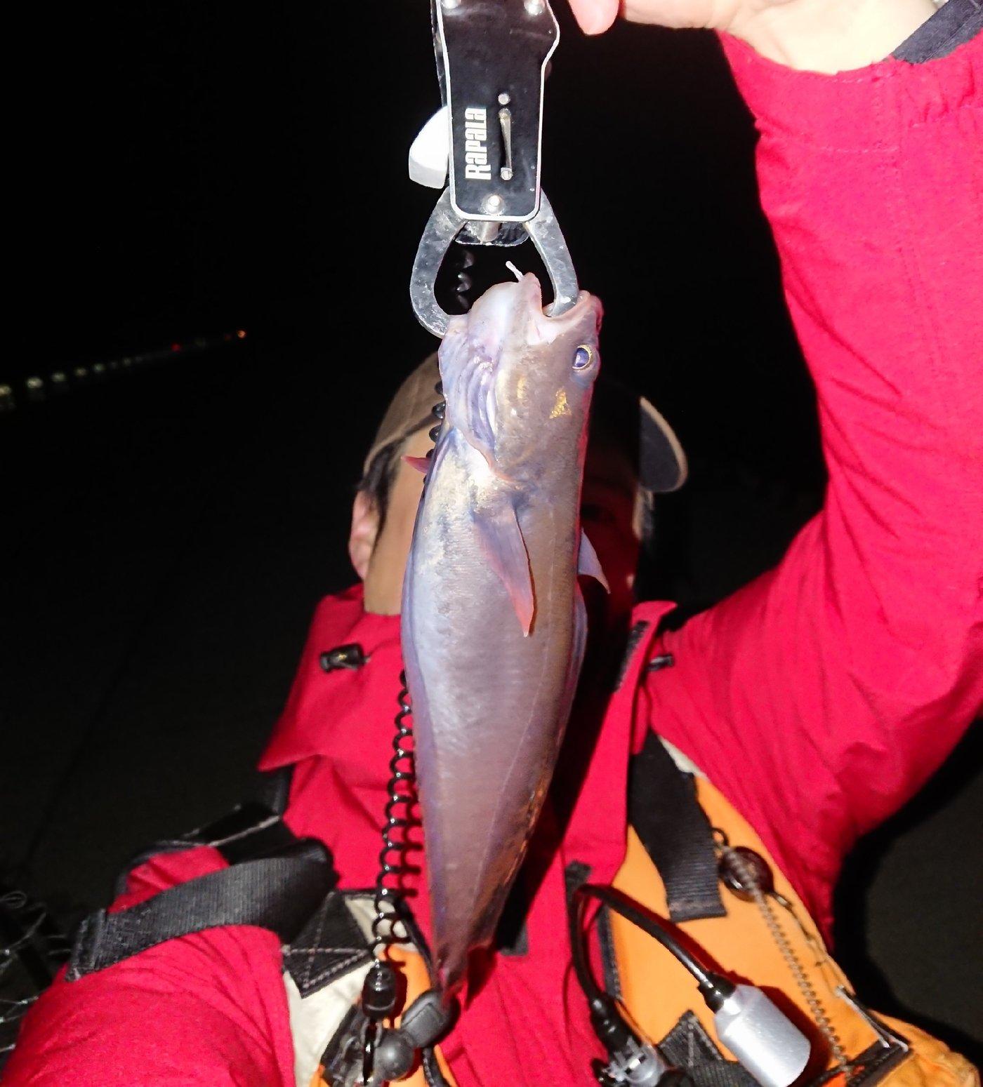 Takaさんの投稿画像,写っている魚はエゾイソアイナメ