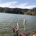 Guchi-yamさんの奈良県での釣果写真
