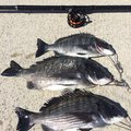 銀次郎さんの新潟県北蒲原郡での釣果写真