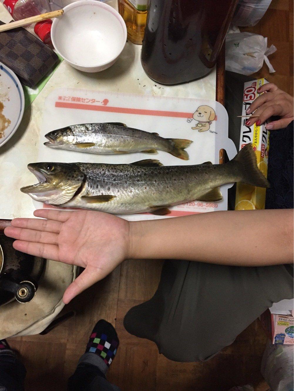 ナカイさんの投稿画像,写っている魚はブラウントラウト