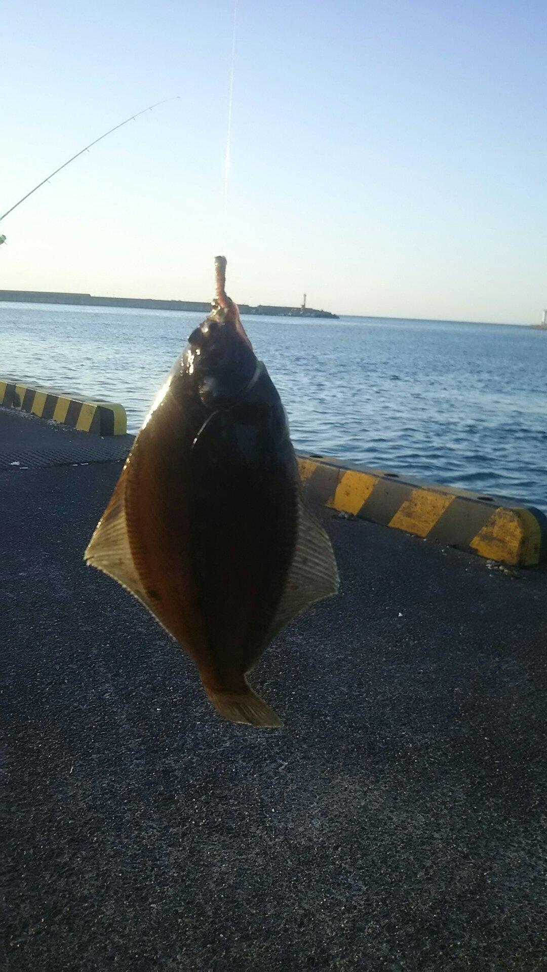 ハリースタンパーさんの投稿画像,写っている魚はカレイ