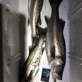 xxxさんの徳島県での釣果写真