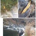 そりみささんの群馬県での釣果写真