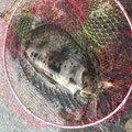 あきらさんの静岡県熱海市での釣果写真