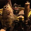 ぺけさんの愛媛県伊予市での釣果写真