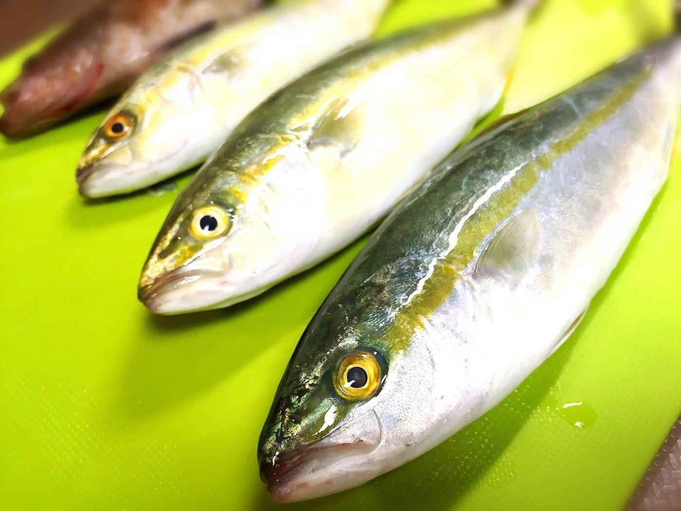 taketonbowさんの投稿画像,写っている魚はブリ