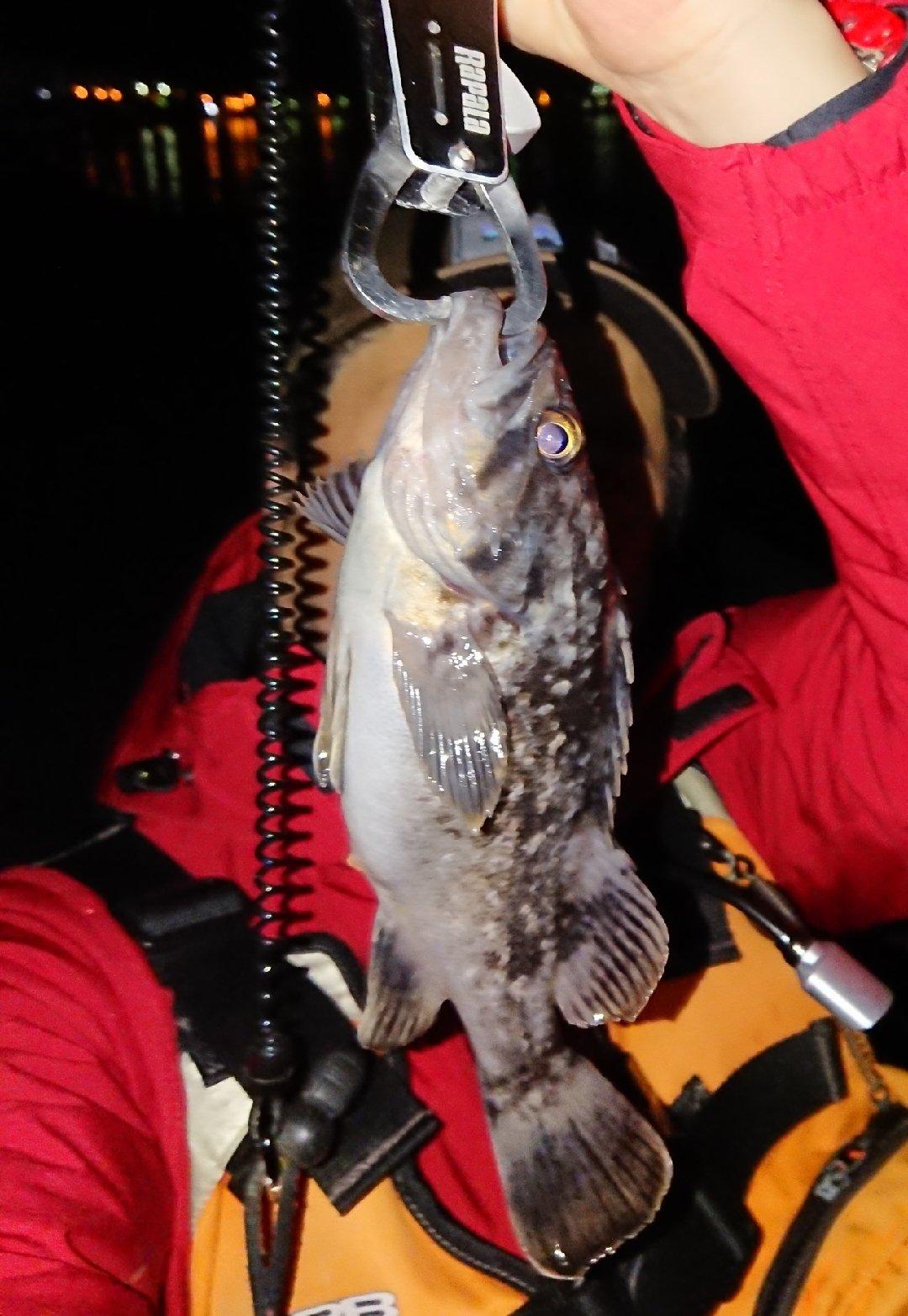 Takaさんの投稿画像,写っている魚はクロソイ