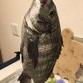 根掛かりさんの広島県呉市での釣果写真