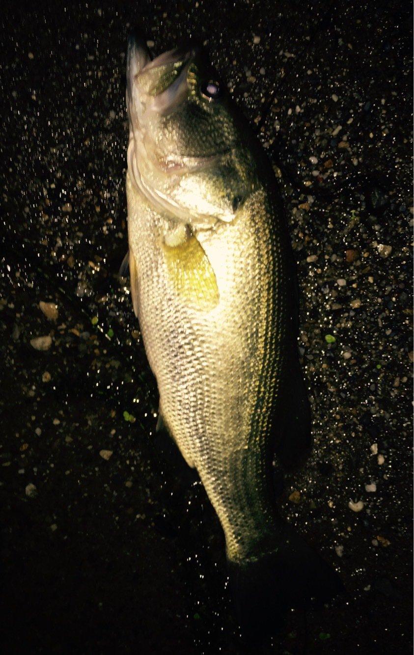 其処乃所 宜君さんの投稿画像,写っている魚はブラックバス