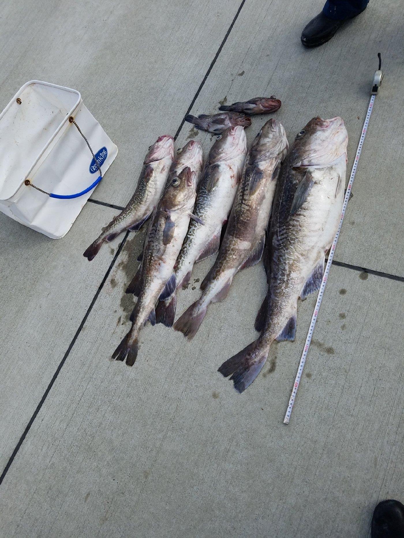 釣り丸さんの投稿画像,写っている魚は